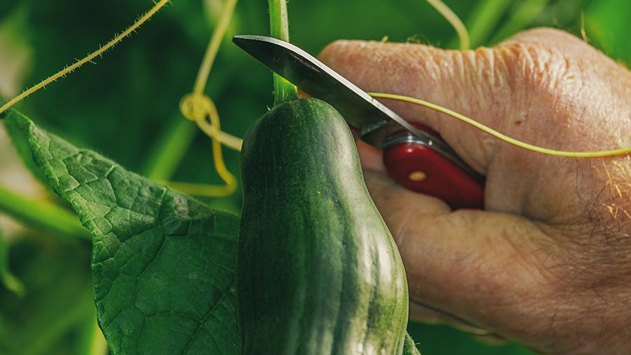 Grow your own food.jpg