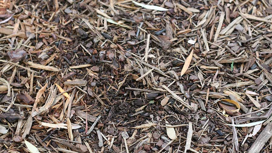 Use Coffee Grounds as Mulch.jpg